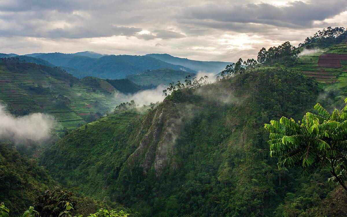Ruanda Bwindi Nationalpark