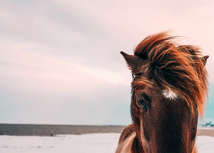 11 Anfänger-Reiturlaube von denen auch fortgeschrittene Reiter beeindruckt sein werden!