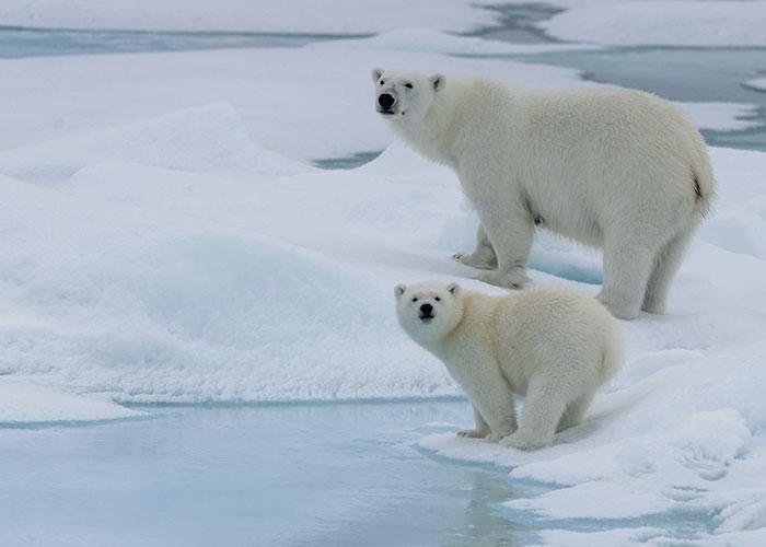 Nur hier, im Norden Kanadas, kommst du den Eisbären zum Greifen nah